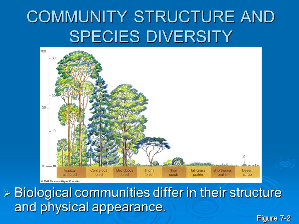 COMMUNITY STRUCTURE AND SPECIES DIVERSITY  Biological communities differ in their structure and physical appearance. Figure 7-2