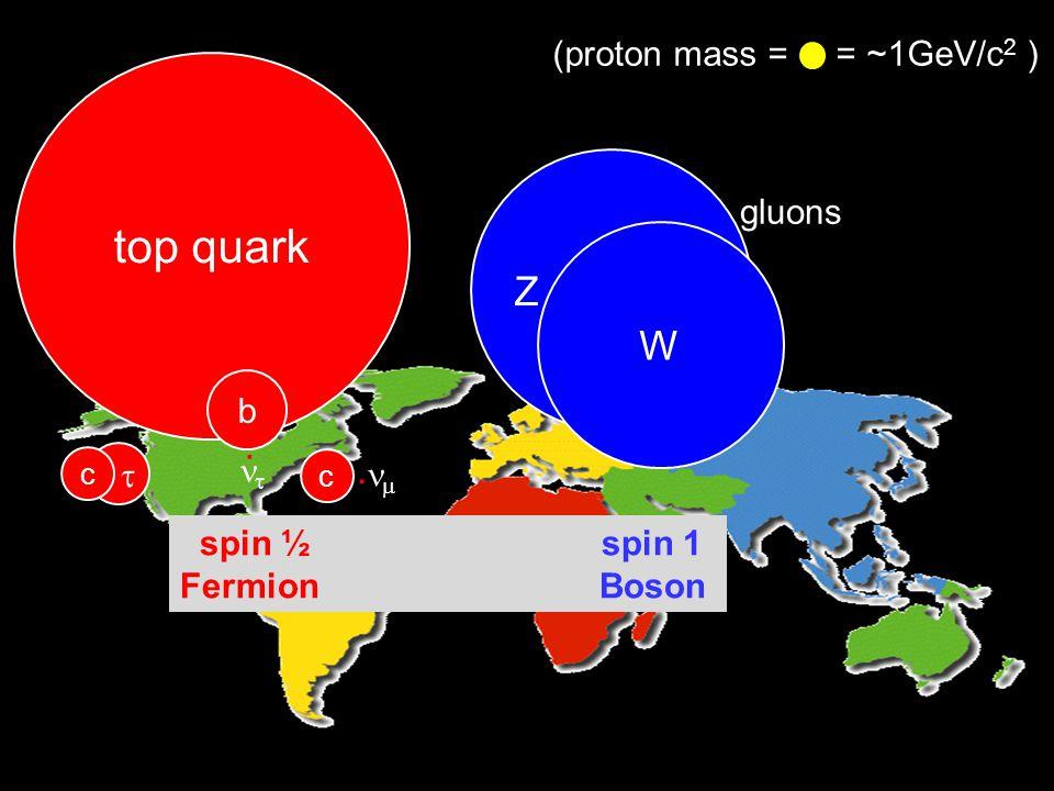 top quark c b . c.   Z W gluons (proton mass = = ~1GeV/c 2 ) spin ½ spin 1 Fermion Boson