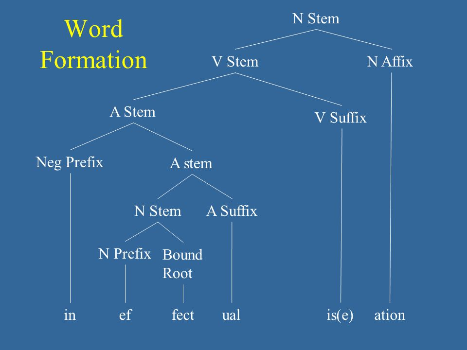 Word Formation inefualationis(e) A Suffix A stem Neg Prefix A Stem V Suffix V Stem N Affix N Stem fect N Prefix N Stem Bound Root