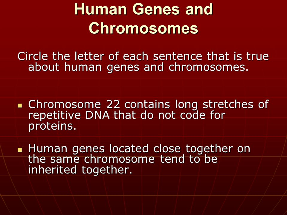 Human Genes and Chromosomes Circle the letter of each sentence that is true about human genes and chromosomes. Chromosome 22 contains long stretches o