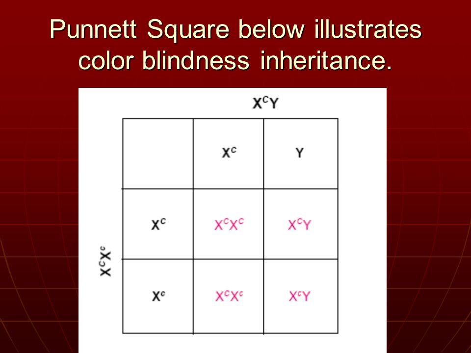 Punnett Square below illustrates color blindness inheritance.