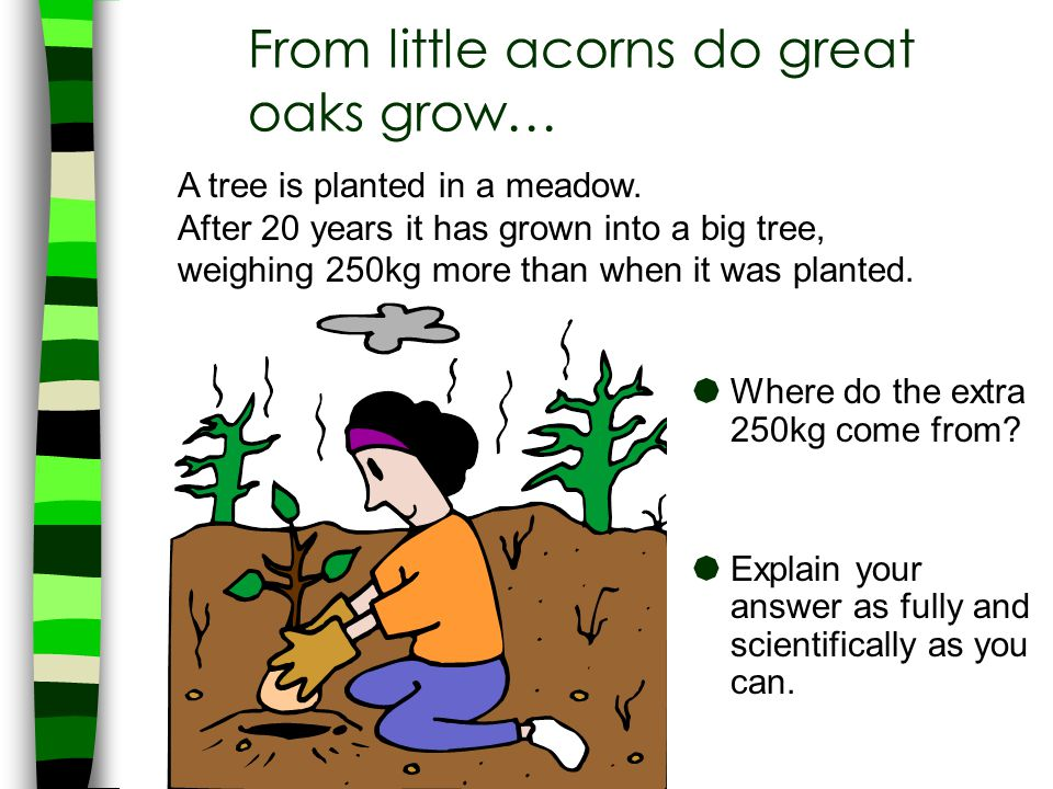 From little acorns do great oaks grow…  Where do the extra 250kg come from?  Explain your answer as fully and scientifically as you can. A tree is p