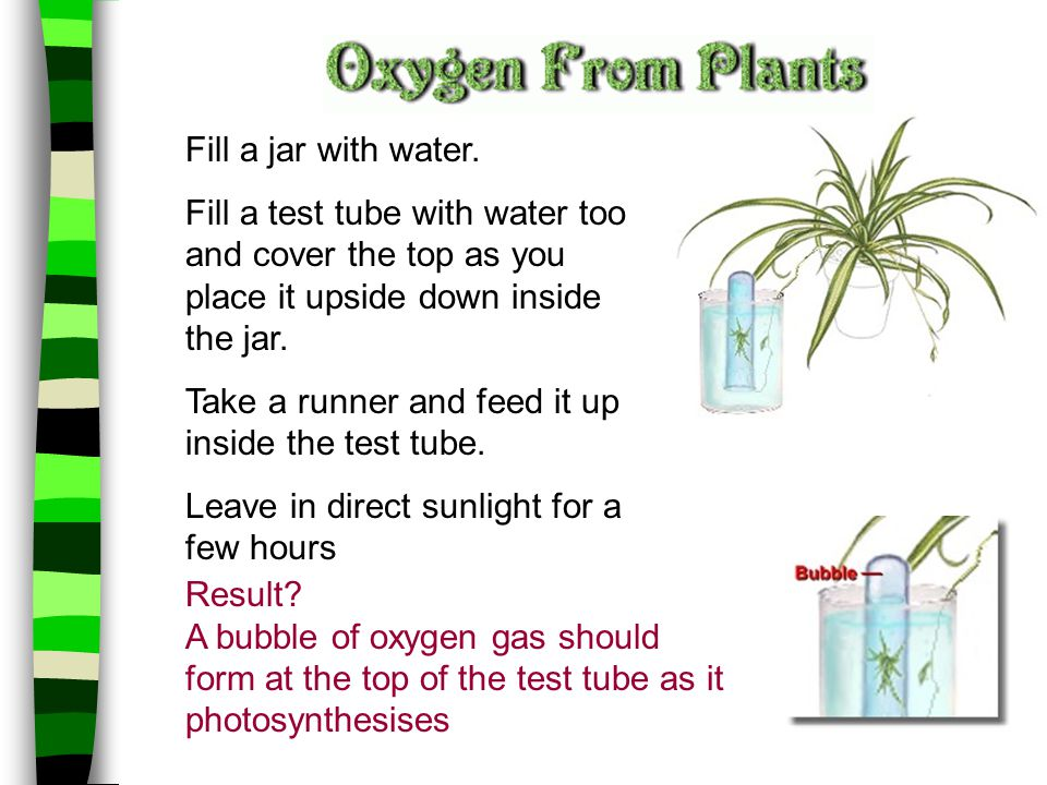 Fill a jar with water. Fill a test tube with water too and cover the top as you place it upside down inside the jar. Take a runner and feed it up insi