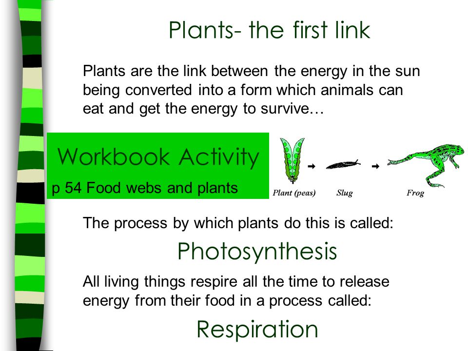 Plants- the first link Plants are the link between the energy in the sun being converted into a form which animals can eat and get the energy to survi