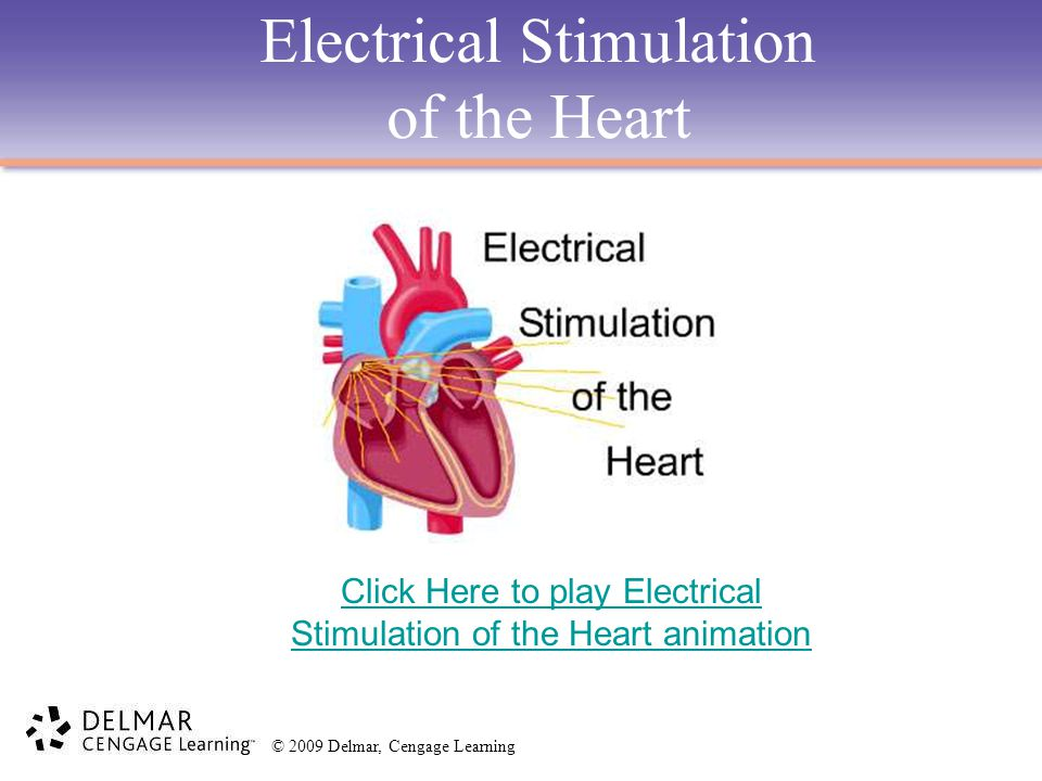 © 2009 Delmar, Cengage Learning Electrical Stimulation of the Heart Click Here to play Electrical Stimulation of the Heart animation