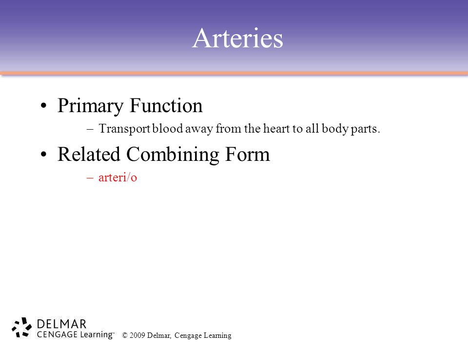 © 2009 Delmar, Cengage Learning Arteries Primary Function –Transport blood away from the heart to all body parts. Related Combining Form –arteri/o