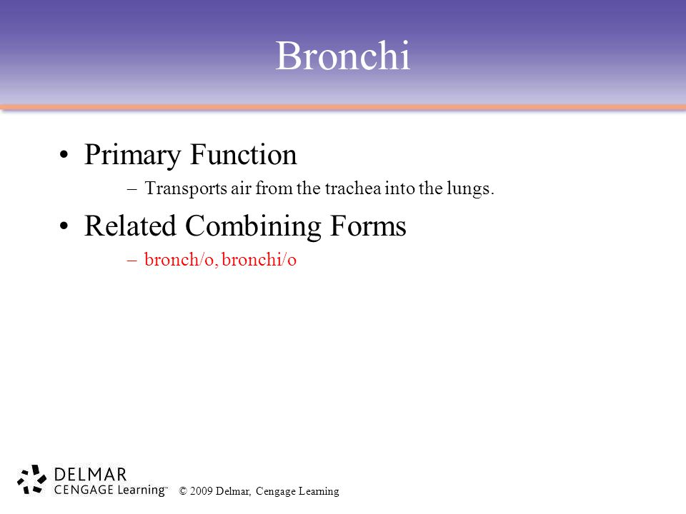 © 2009 Delmar, Cengage Learning Bronchi Primary Function –Transports air from the trachea into the lungs. Related Combining Forms –bronch/o, bronchi/o