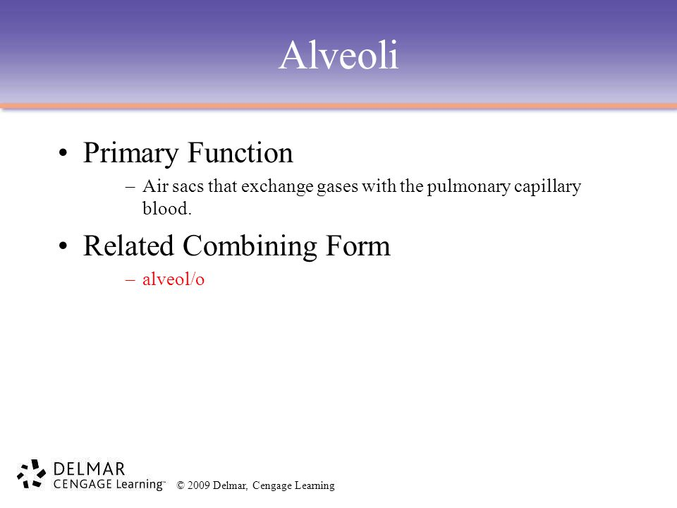 © 2009 Delmar, Cengage Learning Alveoli Primary Function –Air sacs that exchange gases with the pulmonary capillary blood. Related Combining Form –alv