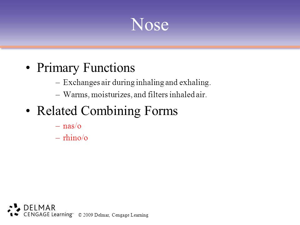 © 2009 Delmar, Cengage Learning Nose Primary Functions –Exchanges air during inhaling and exhaling. –Warms, moisturizes, and filters inhaled air. Rela