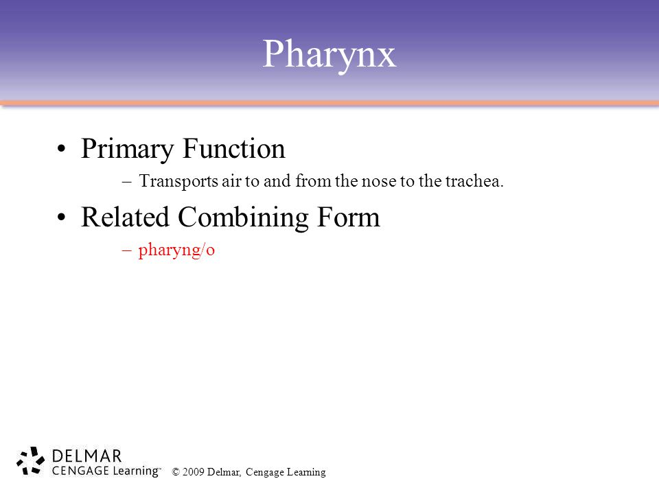 © 2009 Delmar, Cengage Learning Pharynx Primary Function –Transports air to and from the nose to the trachea. Related Combining Form –pharyng/o