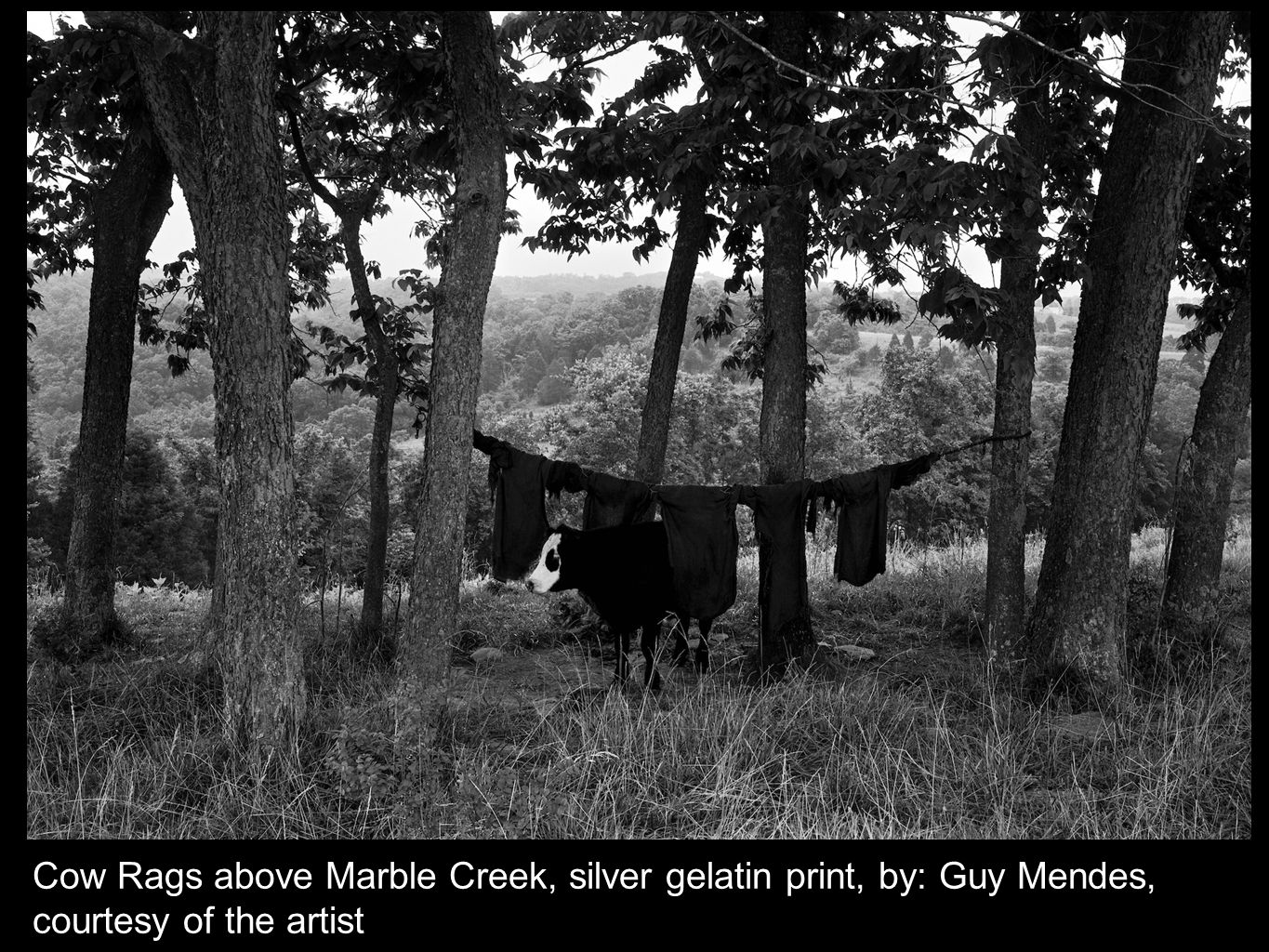 Cow Rags above Marble Creek, silver gelatin print, by: Guy Mendes, courtesy of the artist
