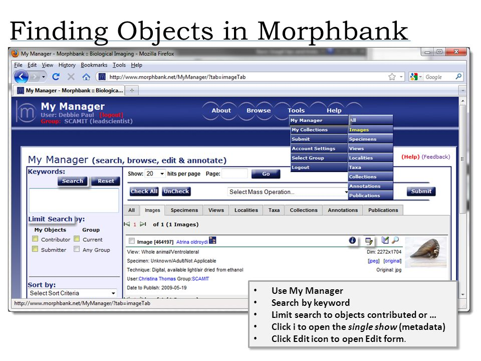 Finding Objects in Morphbank Use My Manager Search by keyword Limit search to objects contributed or … Click i to open the single show (metadata) Clic