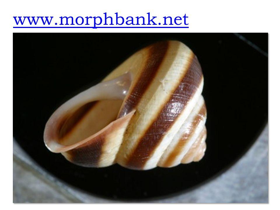 www.morphbank.net