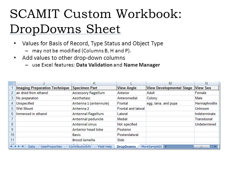 SCAMIT Custom Workbook: DropDowns Sheet Values for Basis of Record, Type Status and Object Type – may not be modified (Columns B, H and P). Add values