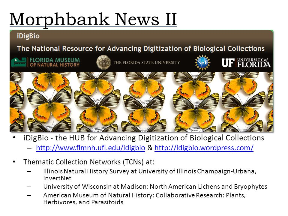 Morphbank News II iDigBio - the HUB for Advancing Digitization of Biological Collections – http://www.flmnh.ufl.edu/idigbio & http://idigbio.wordpress