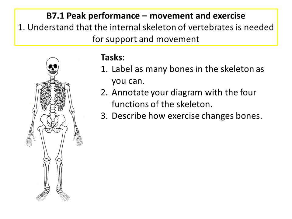 B7.1 Peak performance – movement and exercise 1. Understand that the internal skeleton of vertebrates is needed for support and movement Tasks: 1.Labe