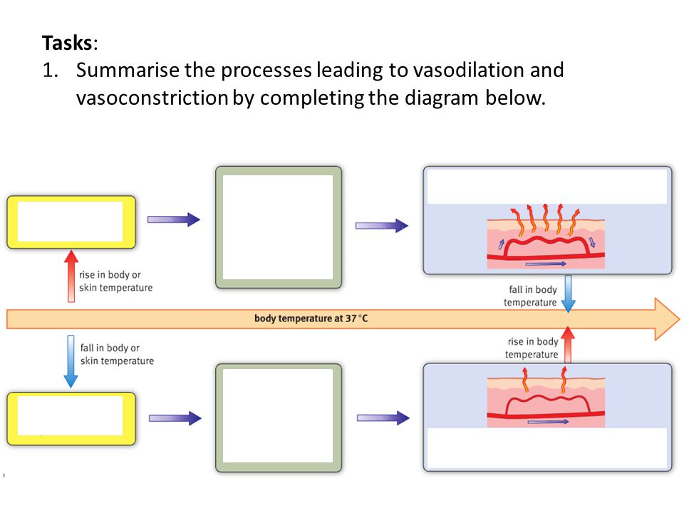 Tasks: 1.Summarise the processes leading to vasodilation and vasoconstriction by completing the diagram below.