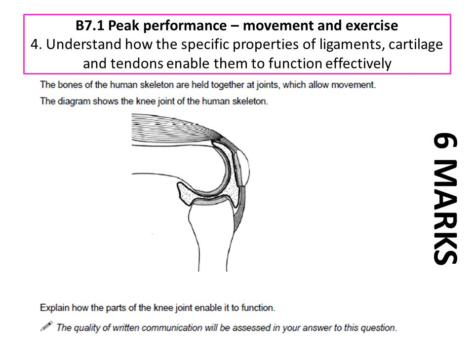B7.1 Peak performance – movement and exercise 4. Understand how the specific properties of ligaments, cartilage and tendons enable them to function ef