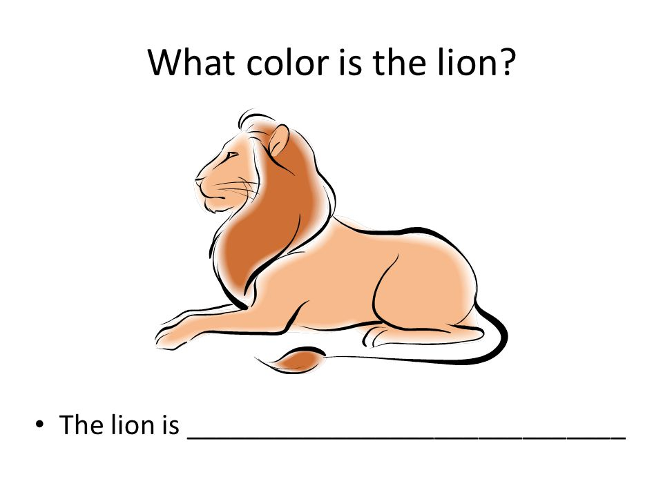 What color is the lion? The lion is ______________________________