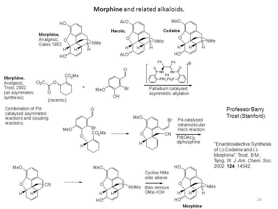 24 Morphine and related alkaloids. Professor Barry Trost (Stanford).