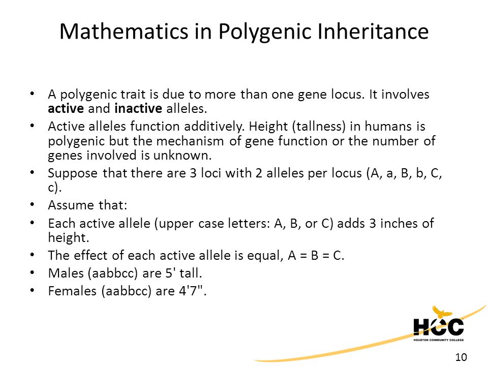 10 Mathematics in Polygenic Inheritance A polygenic trait is due to more than one gene locus.