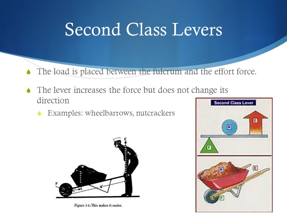 Third Class Levers  The effort is applied between the fulcrum and the load.