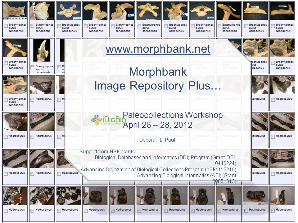 www.morphbank.net Morphbank Image Repository Plus… Paleocollections Workshop April 26 – 28, 2012 Deborah L.