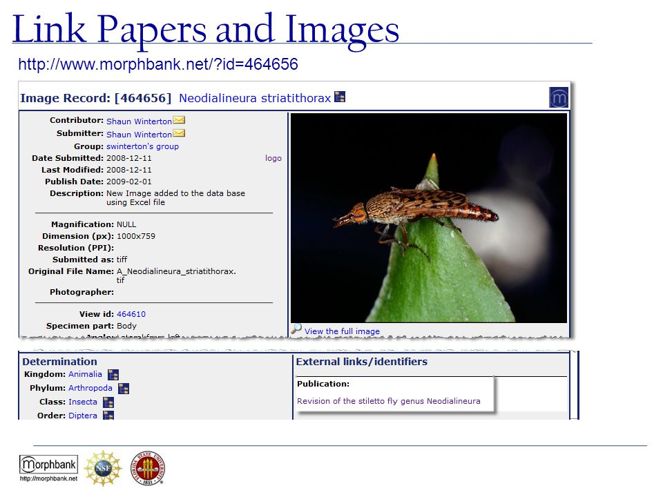 Link Papers and Images http://www.morphbank.net/ id=464656