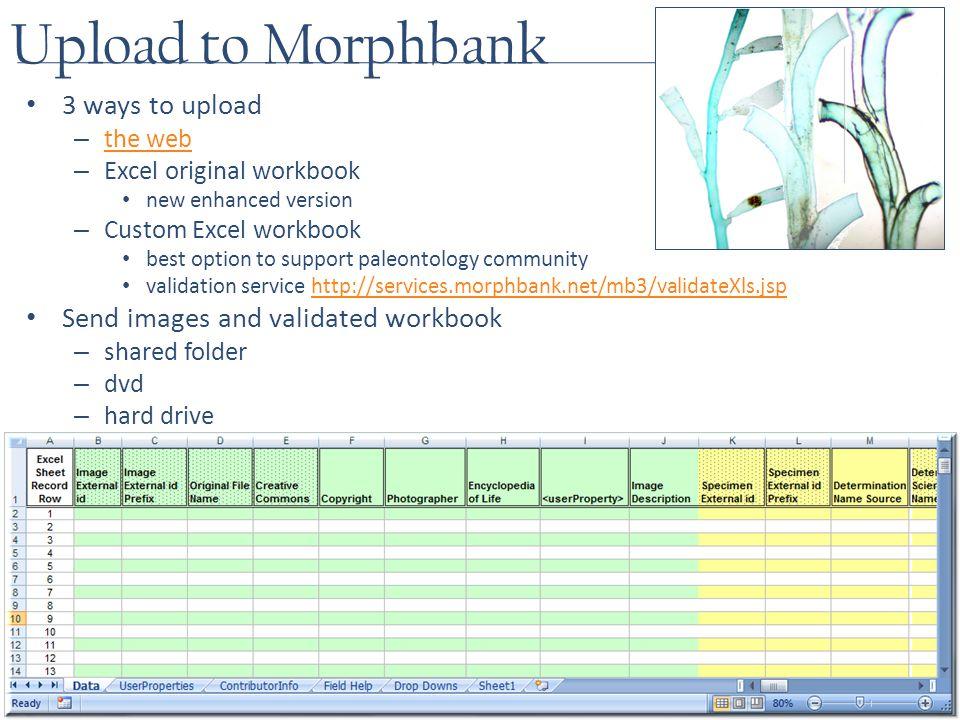 Upload to Morphbank 3 ways to upload – the web the web – Excel original workbook new enhanced version – Custom Excel workbook best option to support paleontology community validation service http://services.morphbank.net/mb3/validateXls.jsphttp://services.morphbank.net/mb3/validateXls.jsp Send images and validated workbook – shared folder – dvd – hard drive