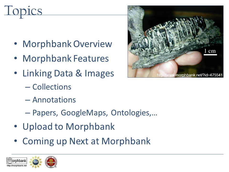 Topics Morphbank Overview Morphbank Features Linking Data & Images – Collections – Annotations – Papers, GoogleMaps, Ontologies,… Upload to Morphbank Coming up Next at Morphbank http://www.morphbank.net/ id=475541