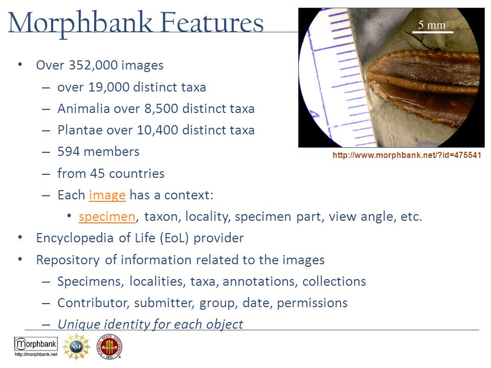 Morphbank Features Over 352,000 images – over 19,000 distinct taxa – Animalia over 8,500 distinct taxa – Plantae over 10,400 distinct taxa – 594 membe