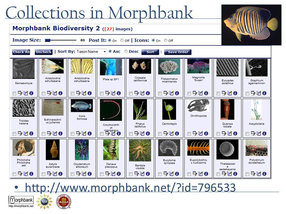 Collections in Morphbank http://www.morphbank.net/?id=796533