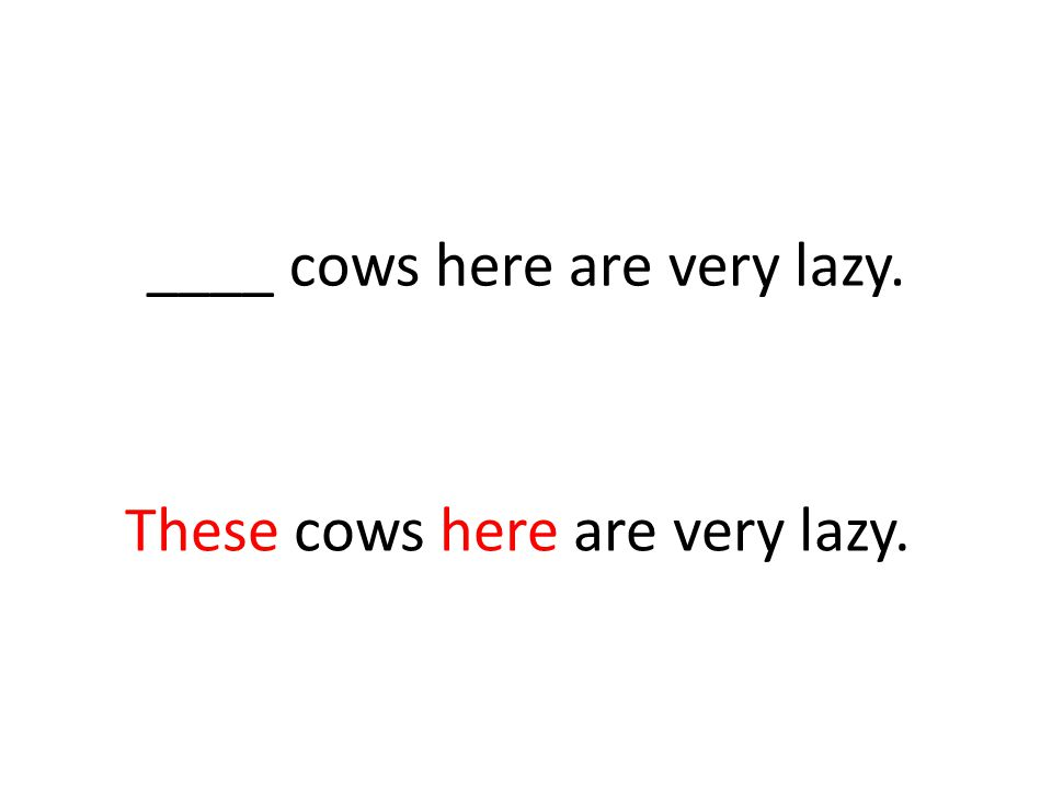 ____ cows here are very lazy. These cows here are very lazy.