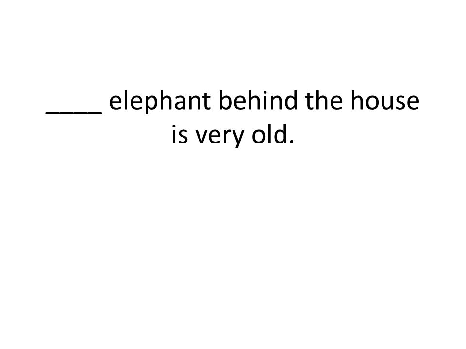 ____ elephant behind the house is very old.