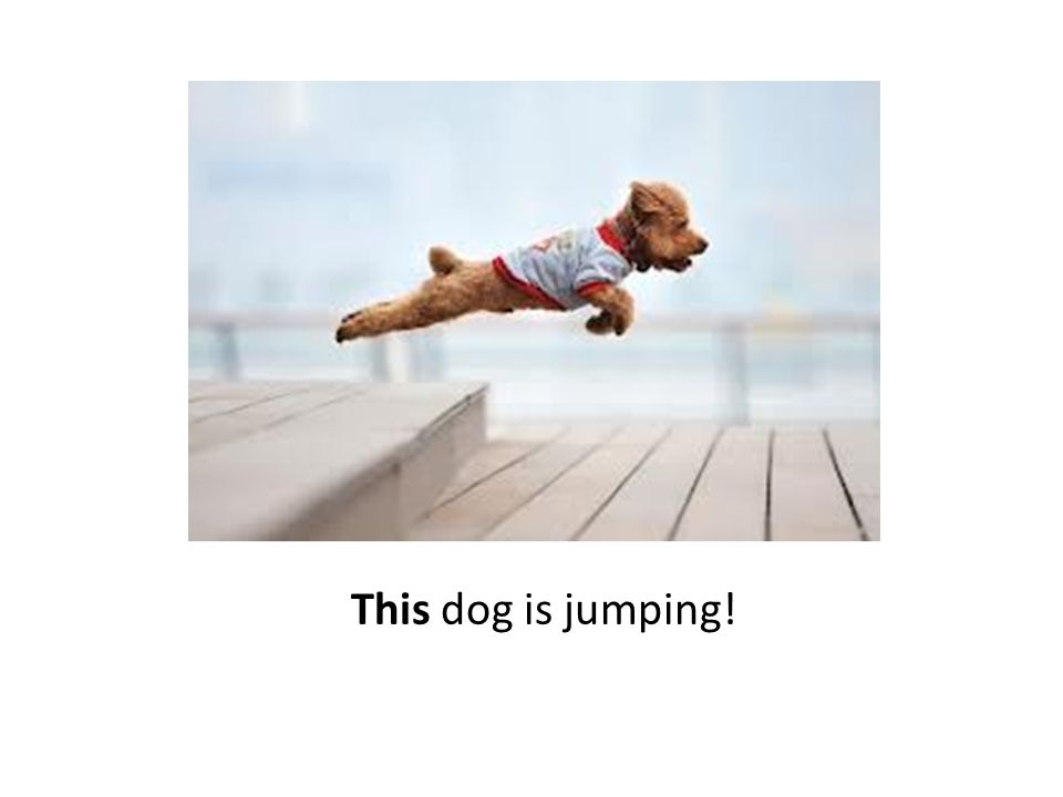 This dog is jumping!