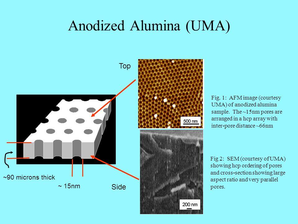 Anodized Alumina (UMA) Fig. 1: AFM image (courtesy UMA) of anodized alumina sample.