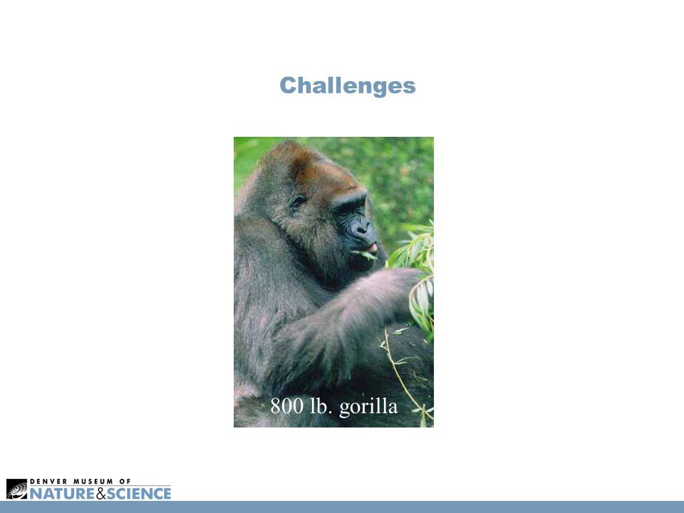 Challenges 800 lb. gorilla