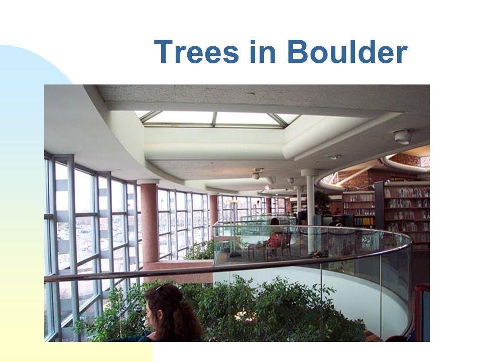 Trees in Boulder