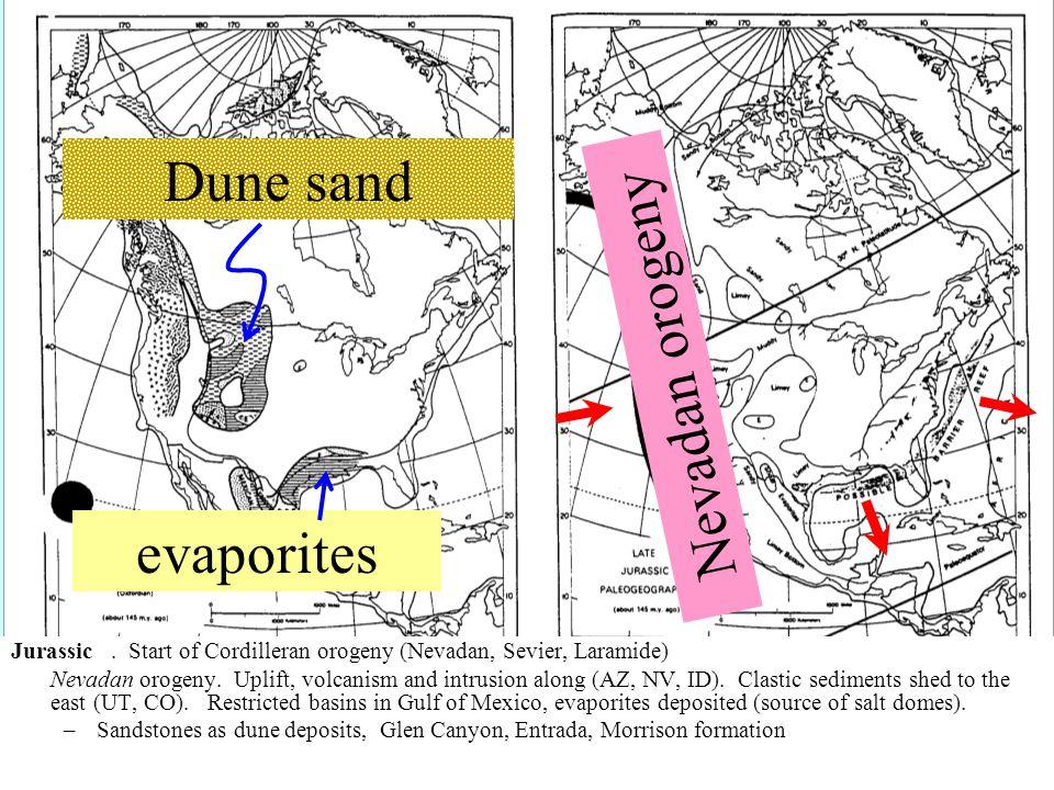 Jurassic. Start of Cordilleran orogeny (Nevadan, Sevier, Laramide) Nevadan orogeny.
