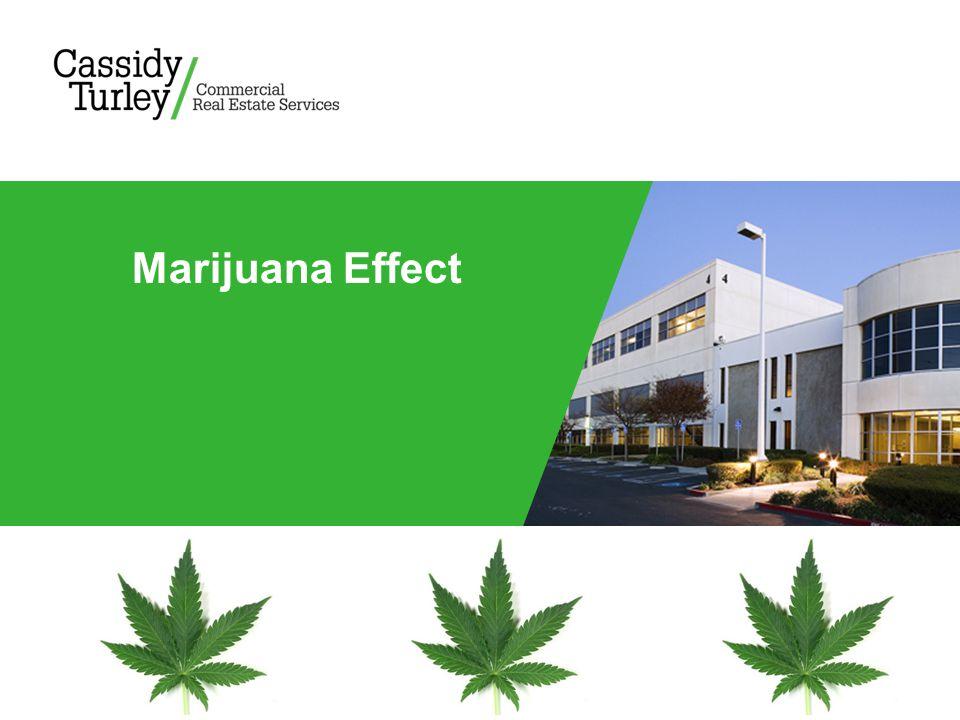 Marijuana Effect