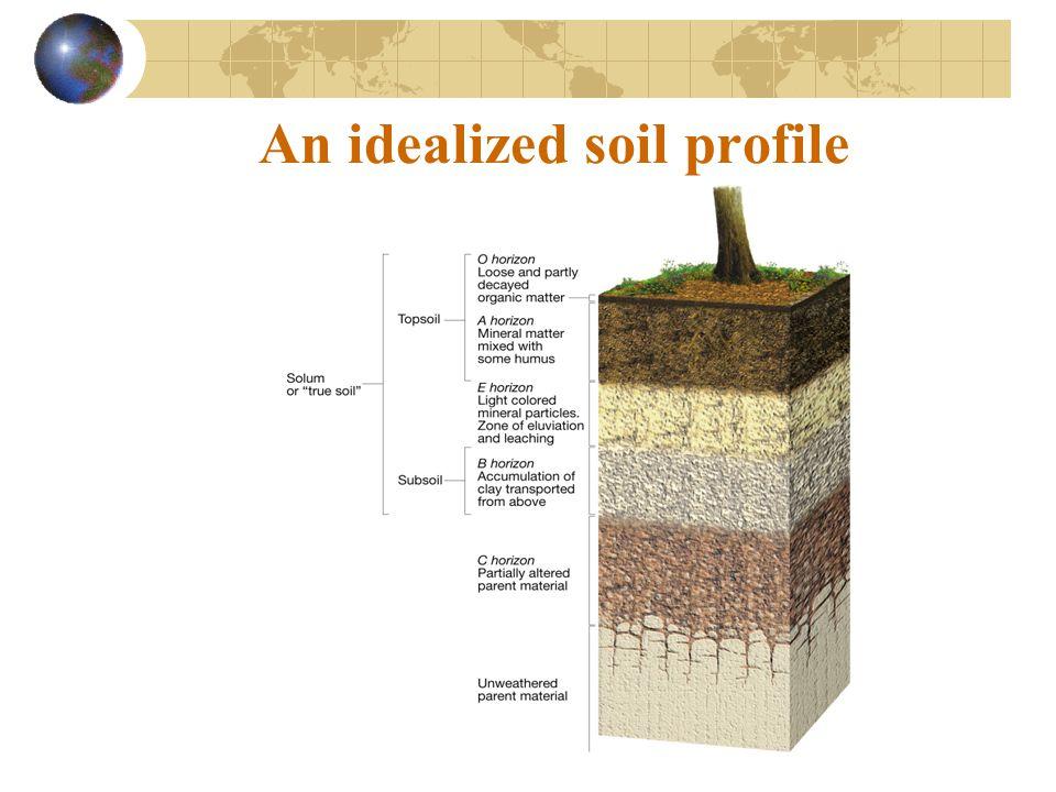 An idealized soil profile