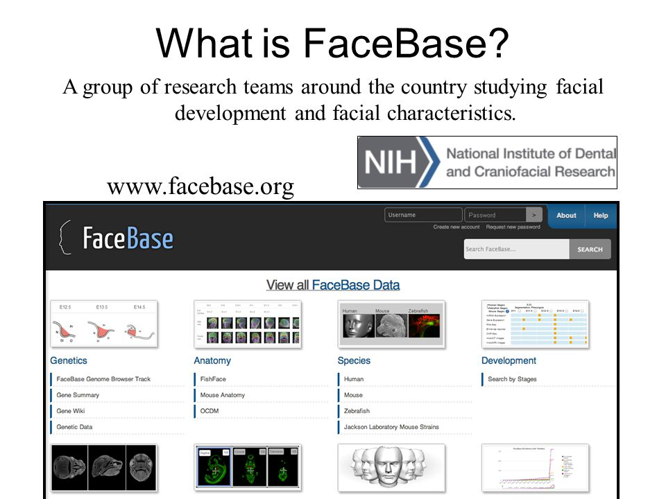 What is FaceBase? A group of research teams around the country studying facial development and facial characteristics. www.facebase.org