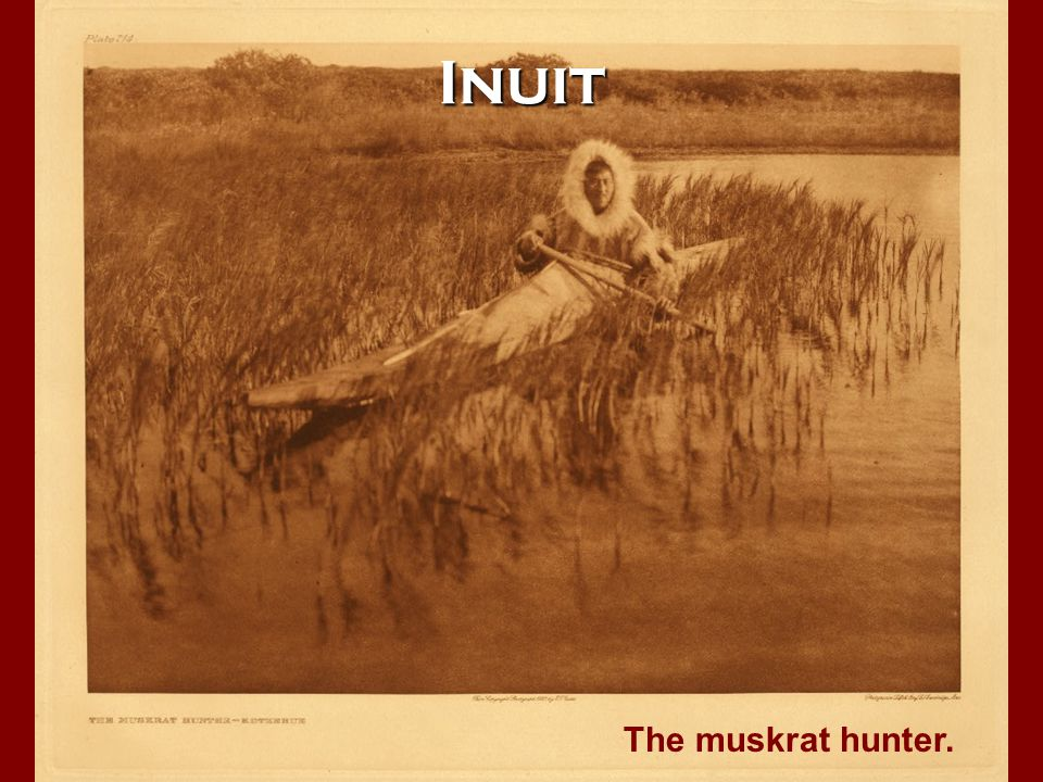Inuit The muskrat hunter.