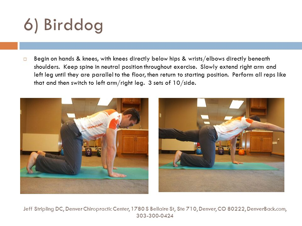 6) Birddog Jeff Stripling DC, Denver Chiropractic Center, 1780 S Bellaire St, Ste 710, Denver, CO 80222, DenverBack.com, 303-300-0424  Begin on hands & knees, with knees directly below hips & wrists/elbows directly beneath shoulders.