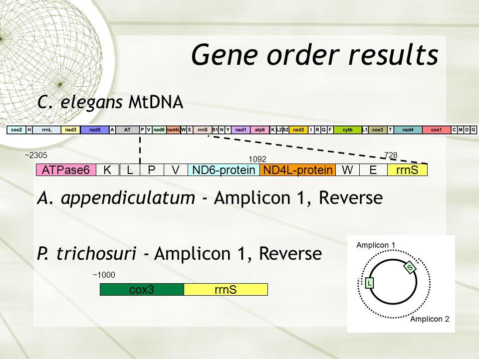 Gene order results A. appendiculatum - Amplicon 1, Reverse rrnScox3 rrnS 728 EWND4L-proteinND6-protein 1092 VPLKATPase6 ~2305 P. trichosuri - Amplicon