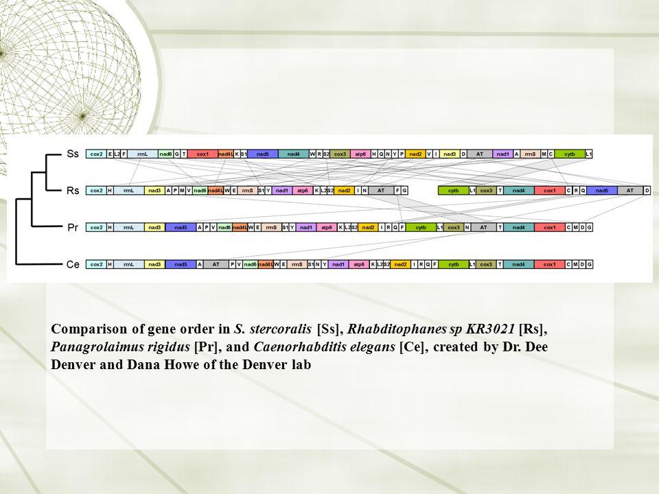 Comparison of gene order in S. stercoralis [Ss], Rhabditophanes sp KR3021 [Rs], Panagrolaimus rigidus [Pr], and Caenorhabditis elegans [Ce], created b