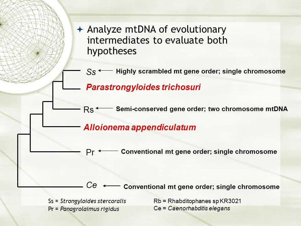 Ce Pr Alloionema appendiculatum Rs Parastrongyloides trichosuri Ss Conventional mt gene order; single chromosome Highly scrambled mt gene order; singl