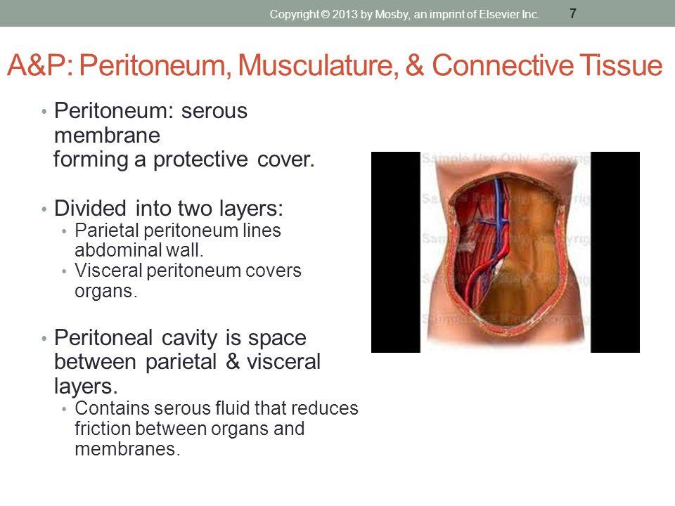 A&P: Peritoneum, Musculature, & Connective Tissue Peritoneum: serous membrane forming a protective cover. Divided into two layers: Parietal peritoneum