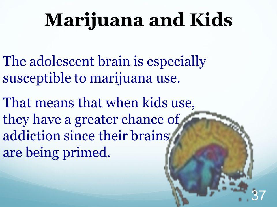 37 Marijuana and Kids The adolescent brain is especially susceptible to marijuana use.