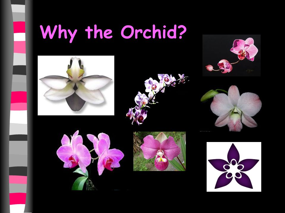 Why the Orchid